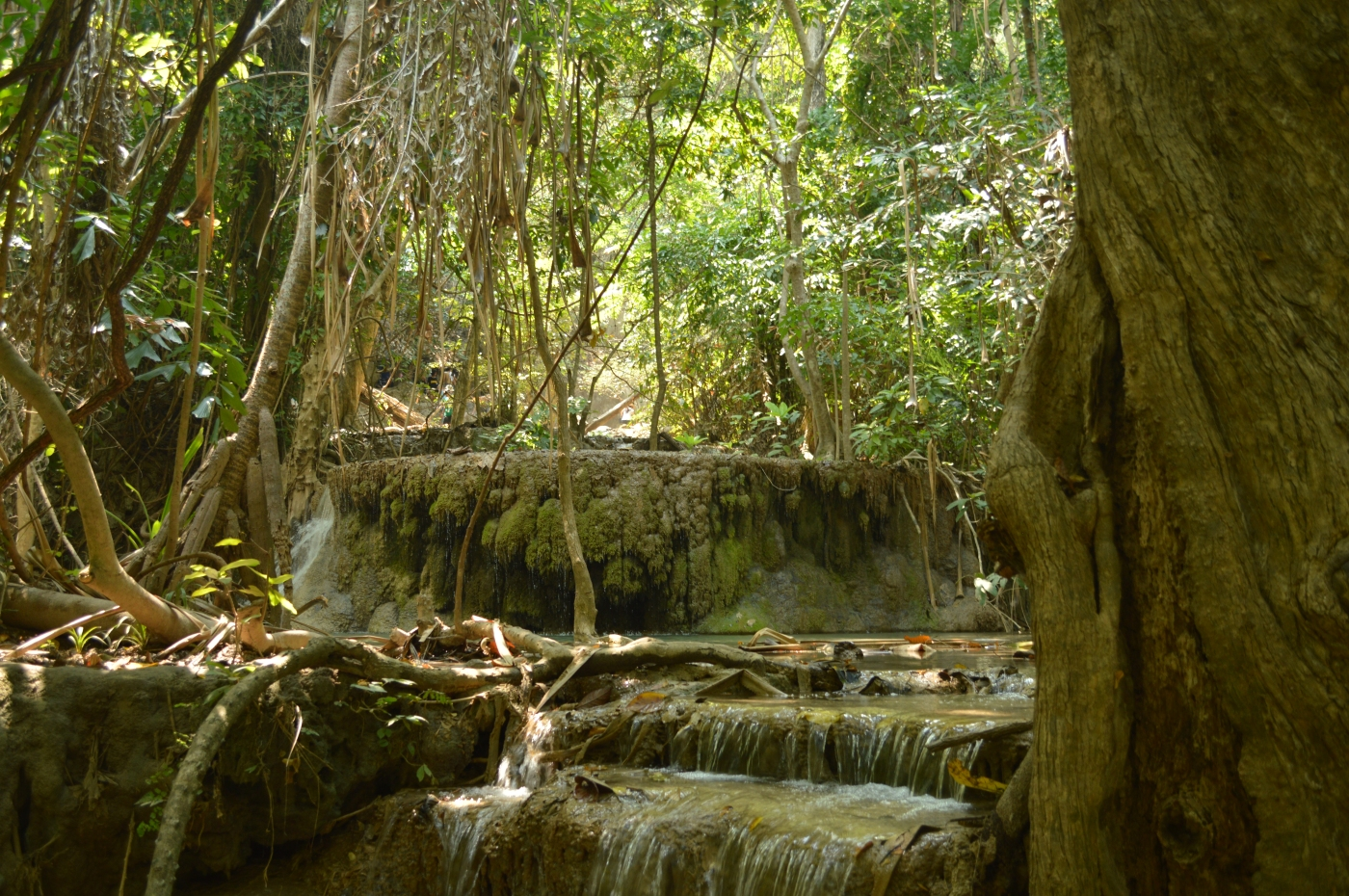 bhutan, nature, afurthershore, blog, altruism, troy-wilkinson, thoughtful, thailand